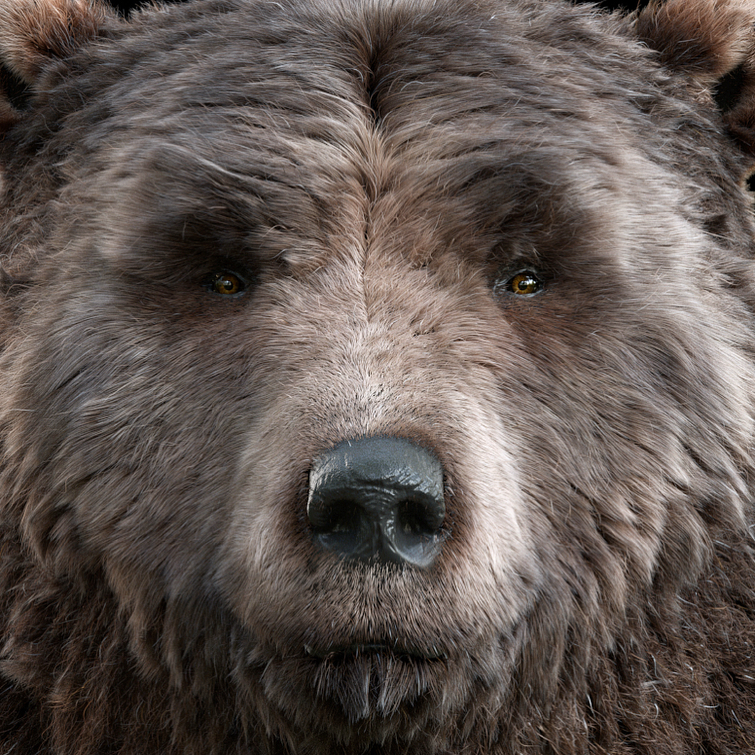 Bear force! Still some stuff to tweak :)