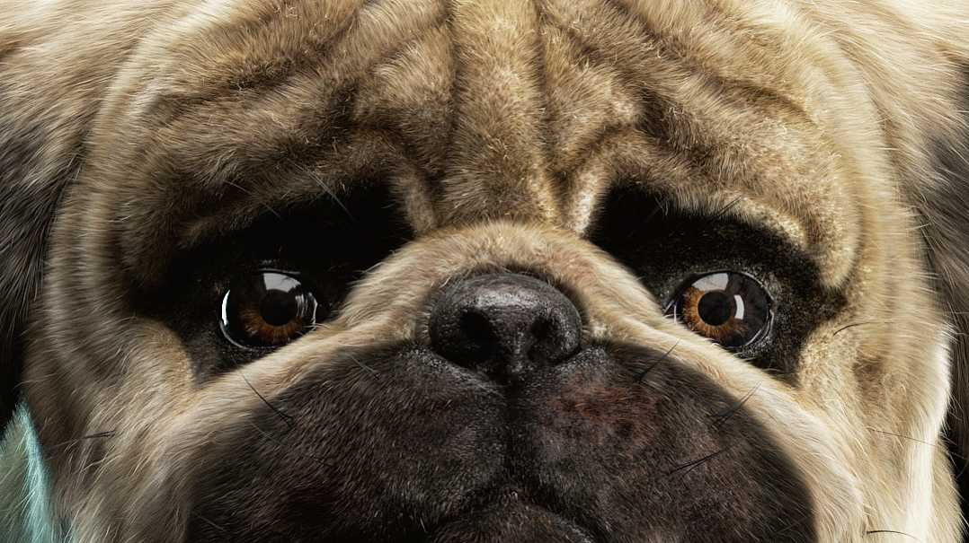 What the Pug?! Improved the fur a little ;)